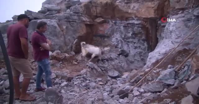 Antalya'da saatler süren hayvan kurtarma operasyonu