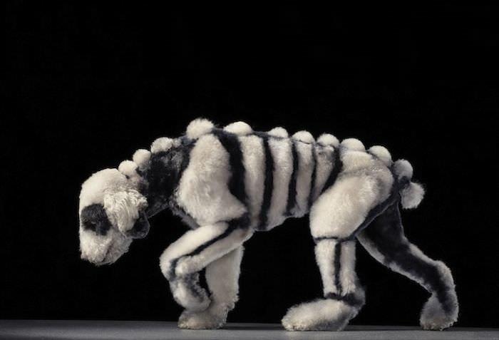 En ilginç köpek resimleri