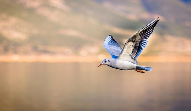 Rüyada kuş görmek nasıl yorumlanır? Rüyada kuş görmenin anlamı iyi mi kötü mü?