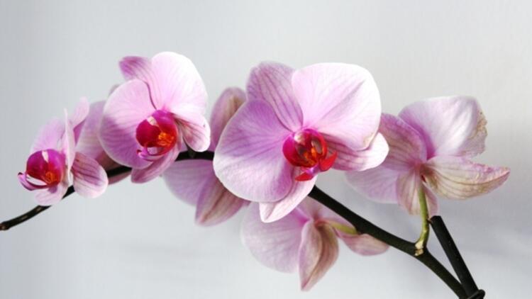 Rüyada Orkide Görmek Ne Anlama Gelir