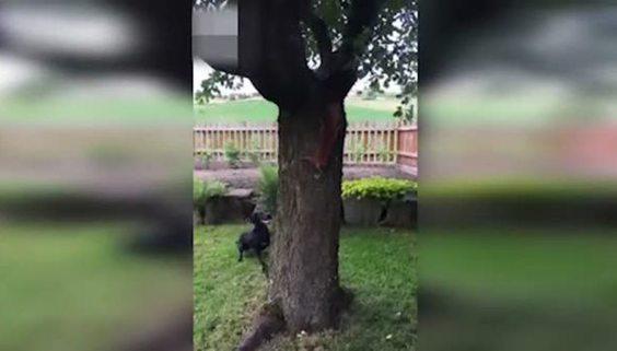 Sincap köpeği böyle deli etti