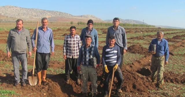 Arabanlı çiftçiler Antep fıstığı üretimine yöneldi