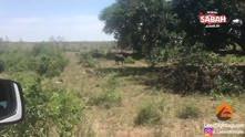Bufalo ormanların kralı aslanı yerden yere vurdu!
